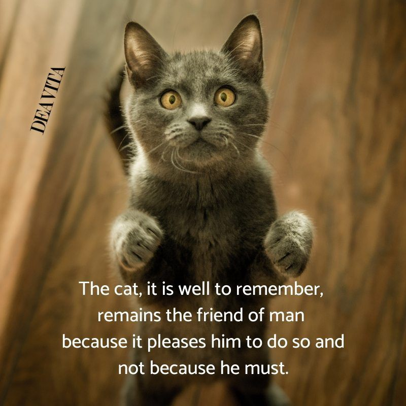 funny cat quotes and photos
