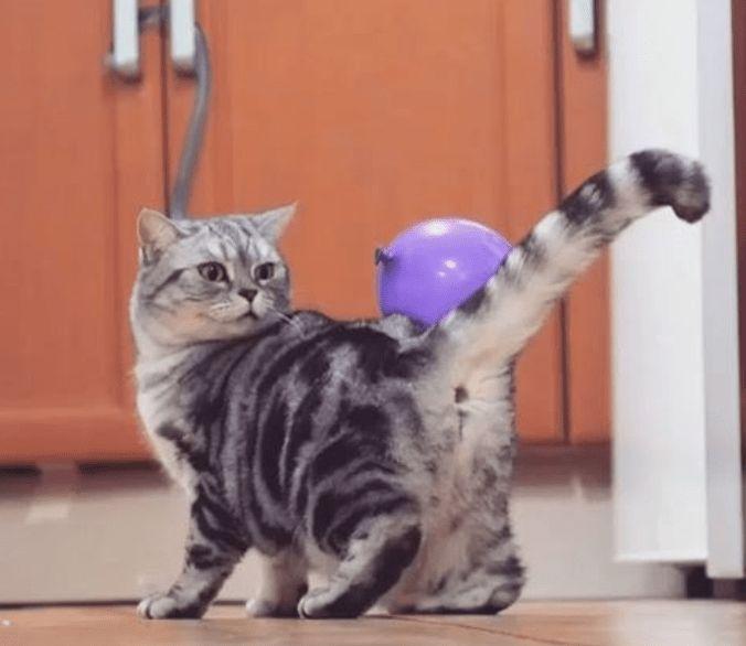 funny cat videos cute videos videos instagram kitten cute funny cats kitten videos cat videos Cats