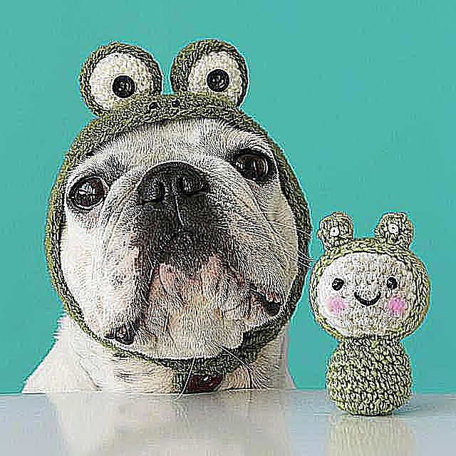 10 animals who are too cute in crochet