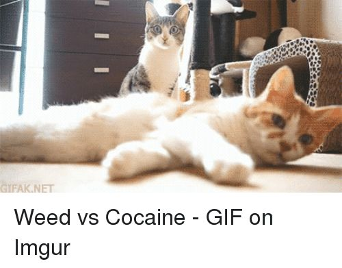 Cocaine Gif