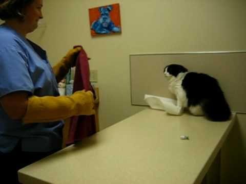 Psycho Cat Beats Up Vet