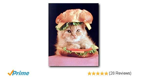 Amazon Cute Cat in a Sandwich Kitten Animal Wall Decor Art Print Poster 16x20 Posters & Prints