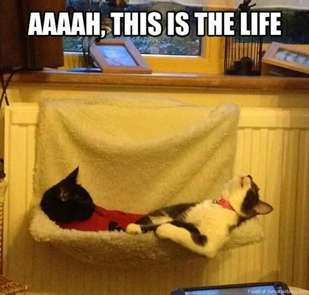 funny cat pictures happy cats on a radiator bed