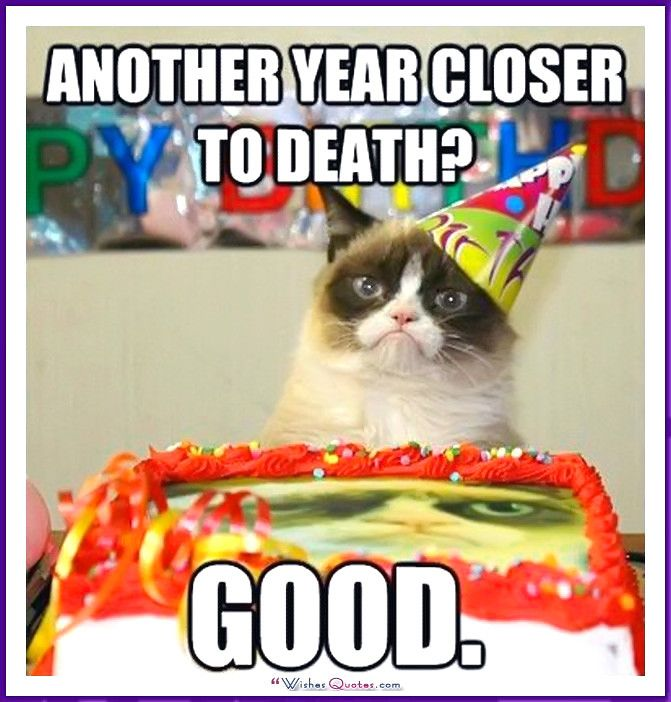 Birthday Meme with a Cat e year closer to Good