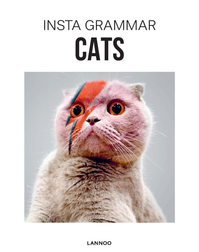 A book of famous Instagram cats so you can scroll cat content IRL