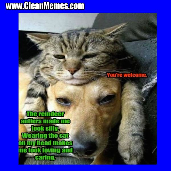 Grab Hold Of the Prodigious Funny Clean Cat Memes