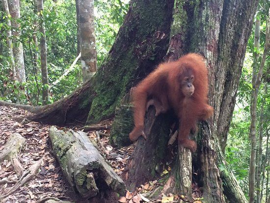 Bukit Lawang Jungle Trekking Tours Day Tours Picture of Bukit Lawang Jungle Trekking Tours Day Tours Bukit Lawang TripAdvisor