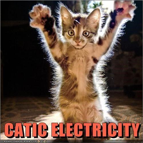 kitten electricity kitty Cats