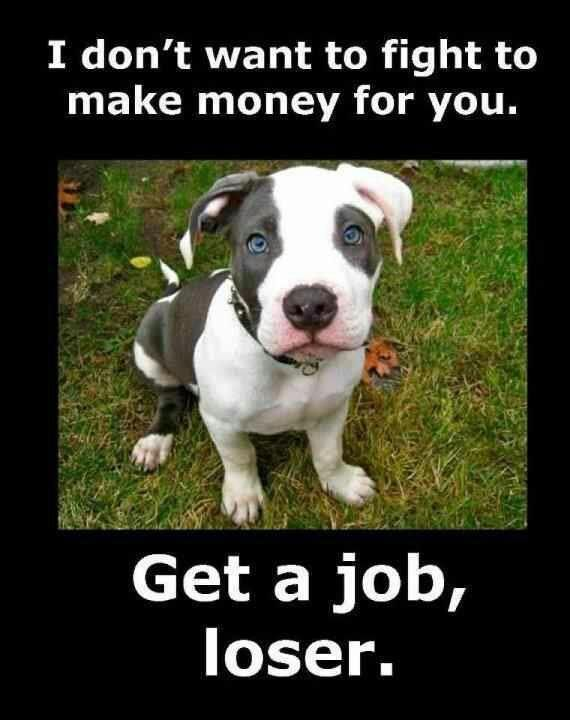"""Pit Bull """"I don t want to fight to make money for you Get a job loser"""