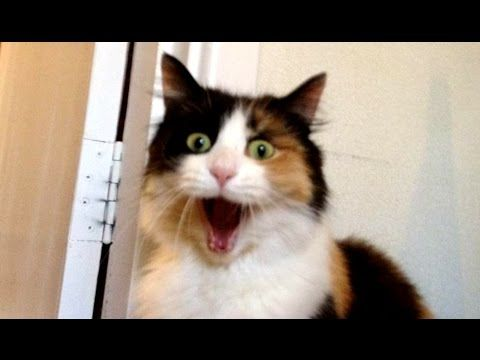 Best Funny Scared Cats pilation NEW HD