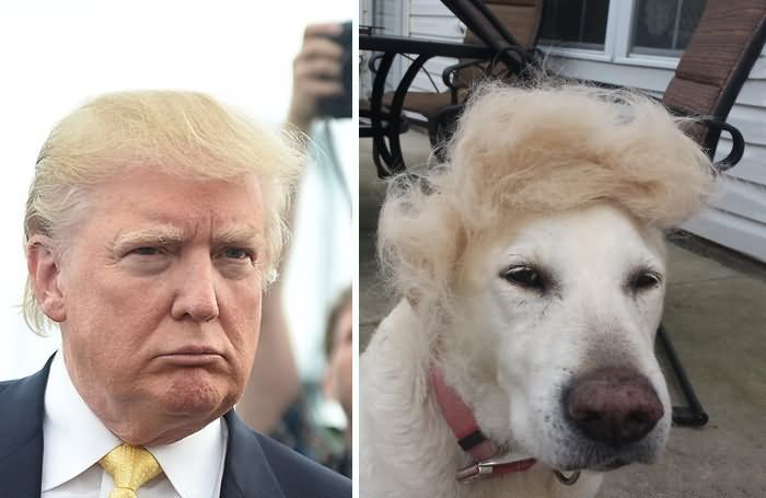 Donald Trump Face Look As A Dog Face Very Funny Image
