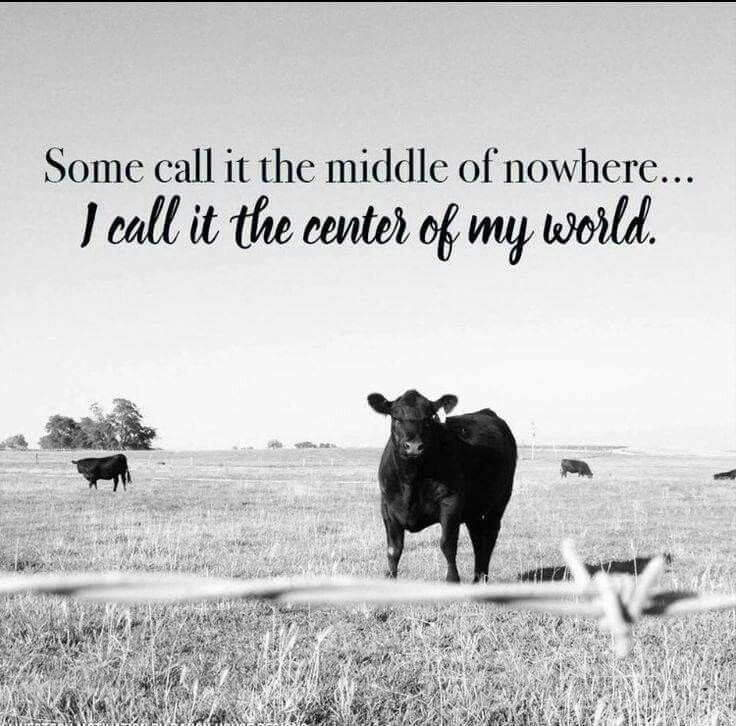 Love working in the middle of cow pastures Farm Life Quotes Country Life