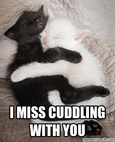 Cuddle Meme Car Memes