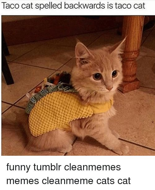 Memes 🤖 and Spelling Taco cat spelled backwards is taco cat funny tumblr