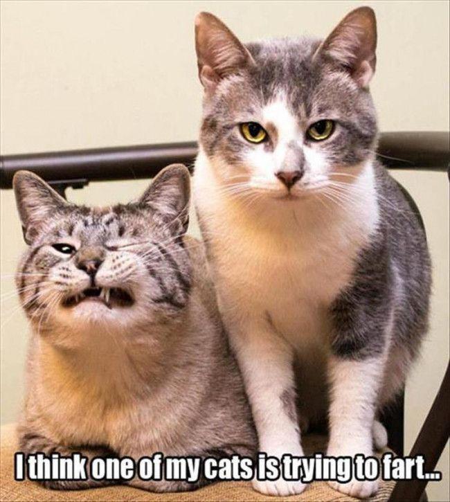 Funny Cat 45 Funny Cats Pinterest