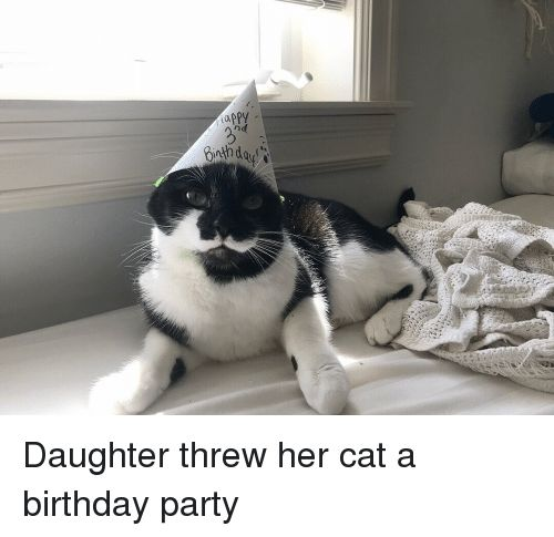 Birthday Party and Happy Happy Daughter threw her cat a birthday party