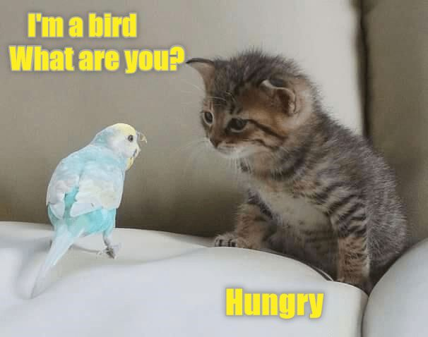 you cat hungry what bird caption