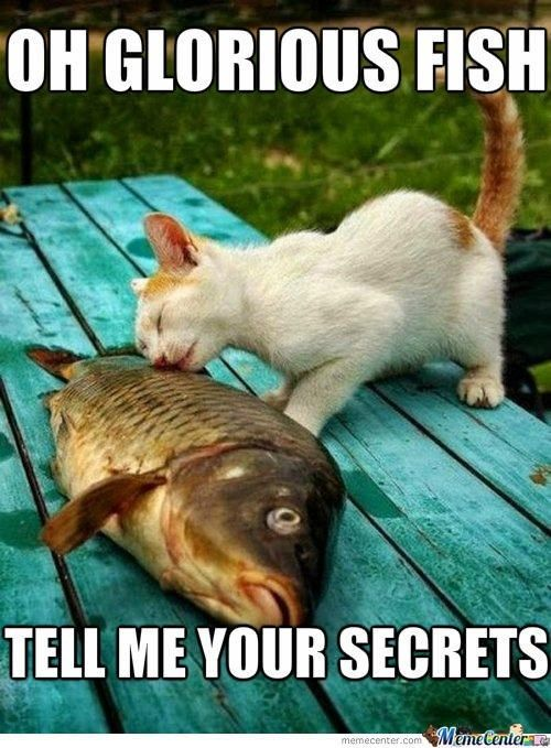 Cat and fish usually a story of one sided love