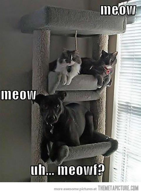 By Dina • Cat pictures Cute dog pictures • • Tags Cute cat pictures Cute dog pictures Funny animal pictures memes