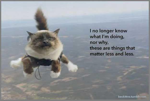 Samuel Beckett Motivational Cat Posters