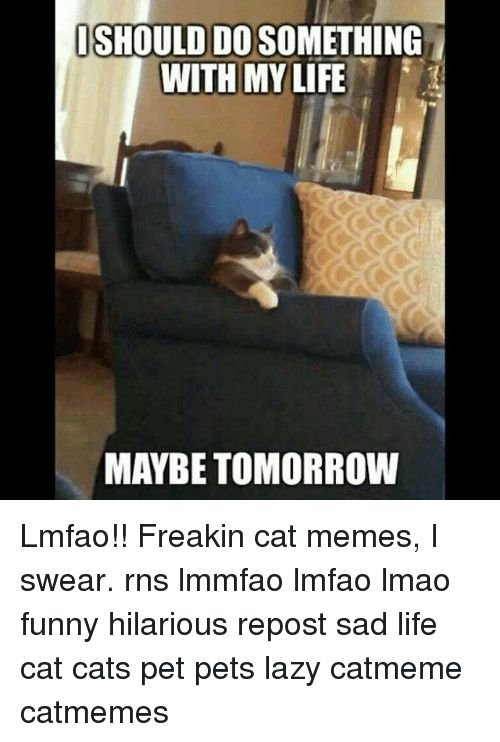 Cats Funny and Lazy ISHOULD DOSOMETHING WITH MY LIFE MAYBE TOMORROW Lmfao
