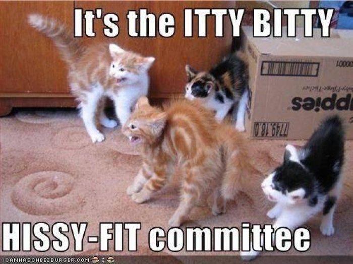 Funny cats meme