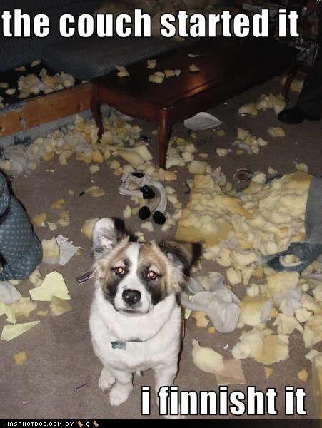 Dog Shaming shame expensive lesson