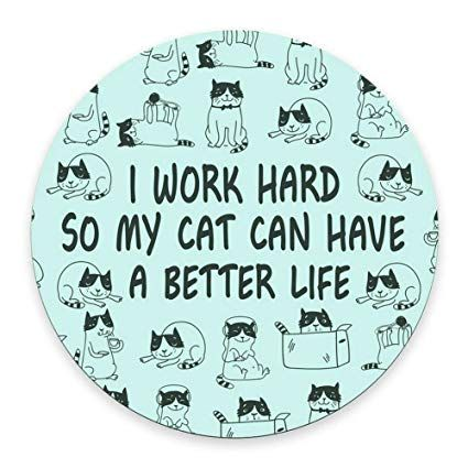 Grab Hold Of the Stunning Funny Office Cat Pictures