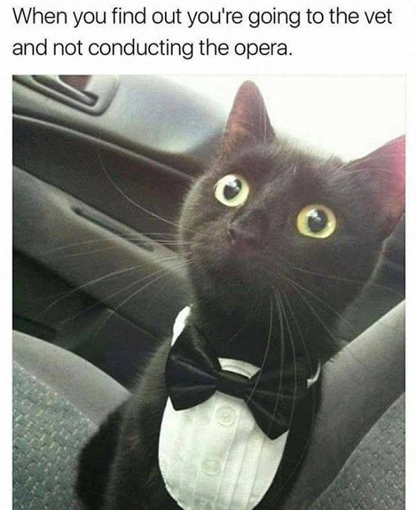 50 Funny of Cats with Captions