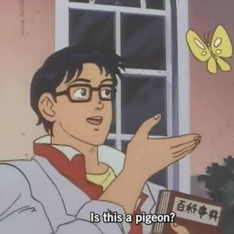 is this a pigeon meme