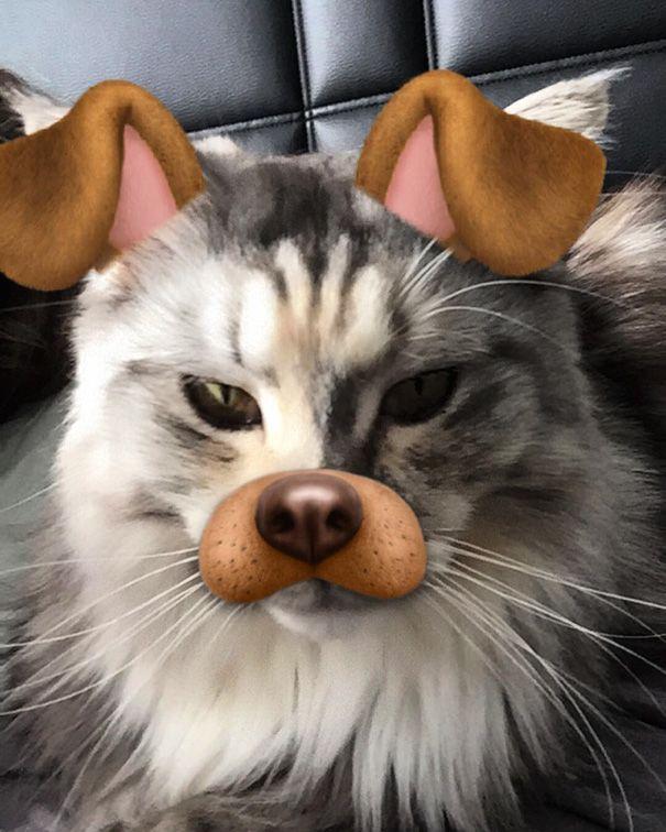 I m Cute As A Dog