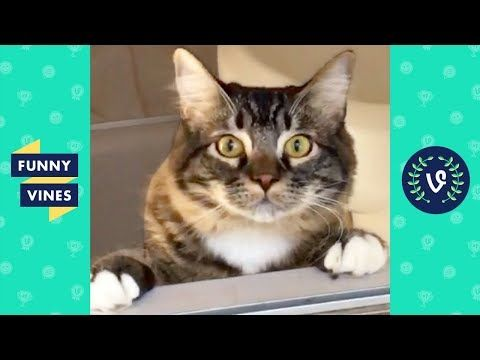 Funniest ANIMALS FAILS pilation 2018 Funny Animal Videos