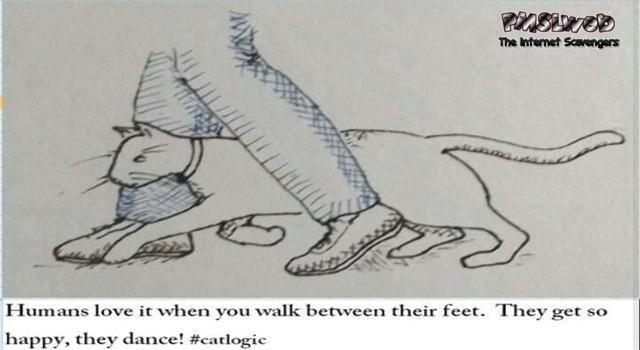 Humans love when you walk between their feet funny cat logic – Funny Hump day memes