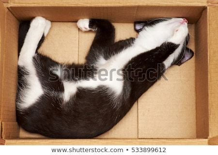 Funny cat mouse smelled in a cardboard box