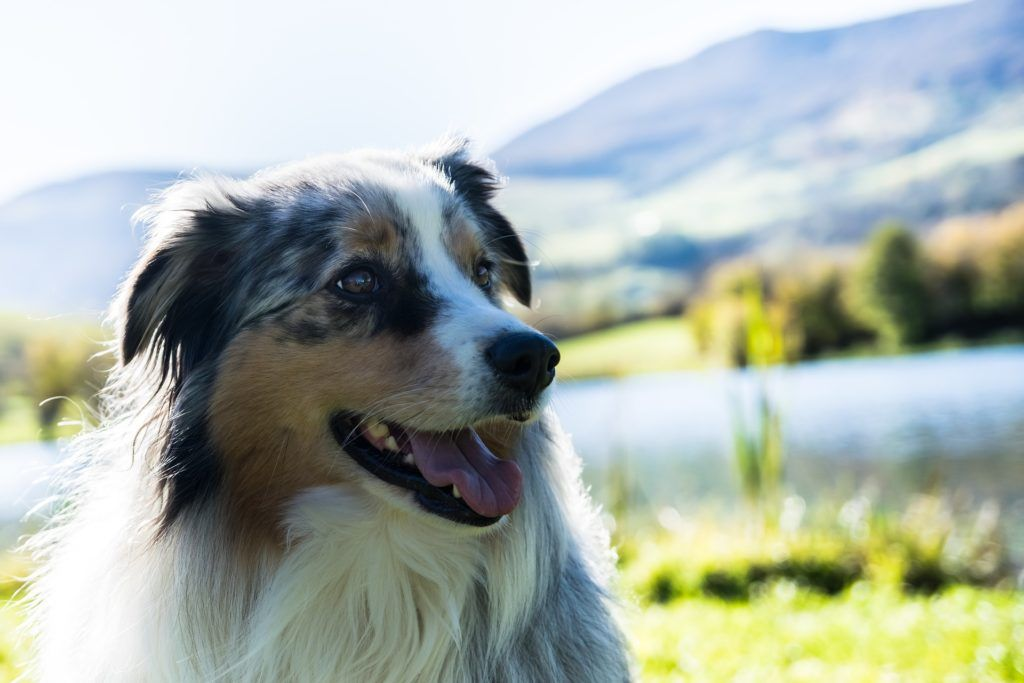 Side Effects of Prozac for Dogs