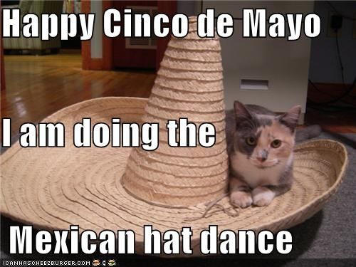 Soup of the Day Tequila Grumpy Cat Cinco de Mayo