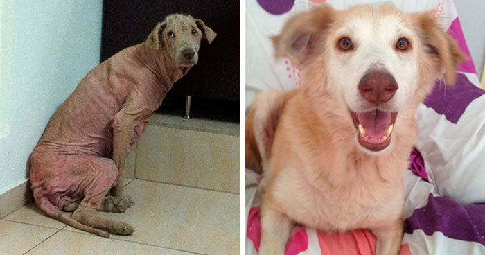 These Abused Dogs Were Rescued From The Streets By A Shelter And Made A Spectacular Recovery