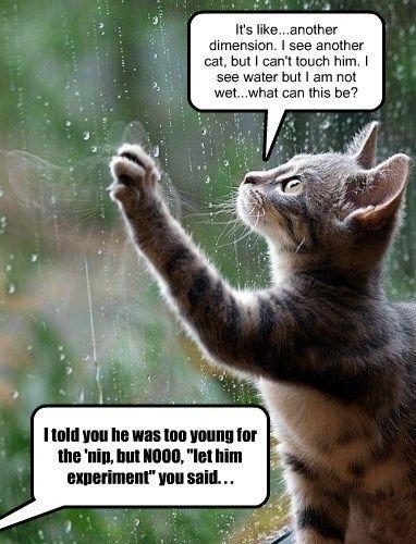 stoned catnip caption Cats funny rain