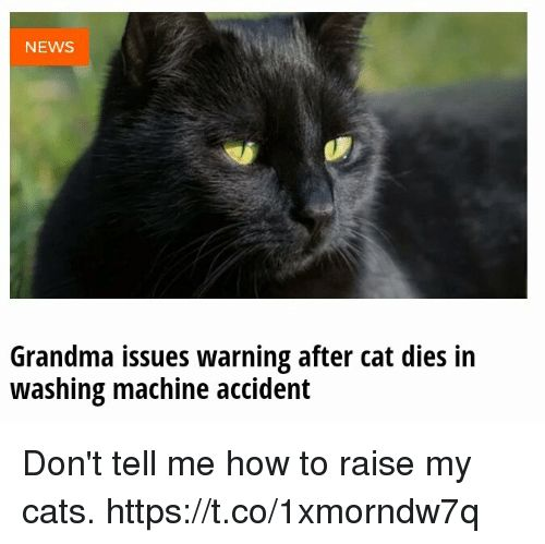 Cats Funny and Grandma NEWS Grandma issues warning after cat s in washing