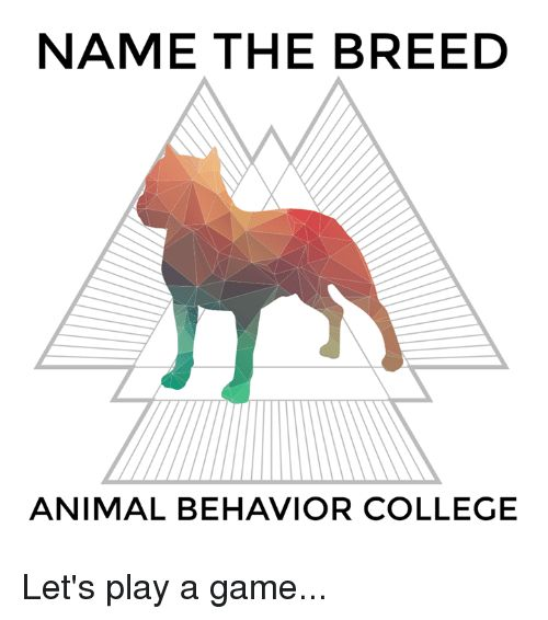 College Memes and Animal NAME THE BREED ANIMAL BEHAVIOR COLLEGE Let s play a