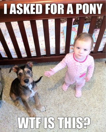 Funny little girl wants a pony
