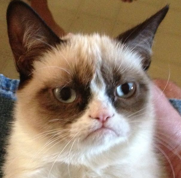 Meme images GRUMPY CAT wallpaper and background photos