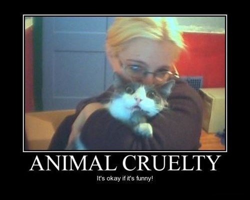 hate cat cruelty funny animals