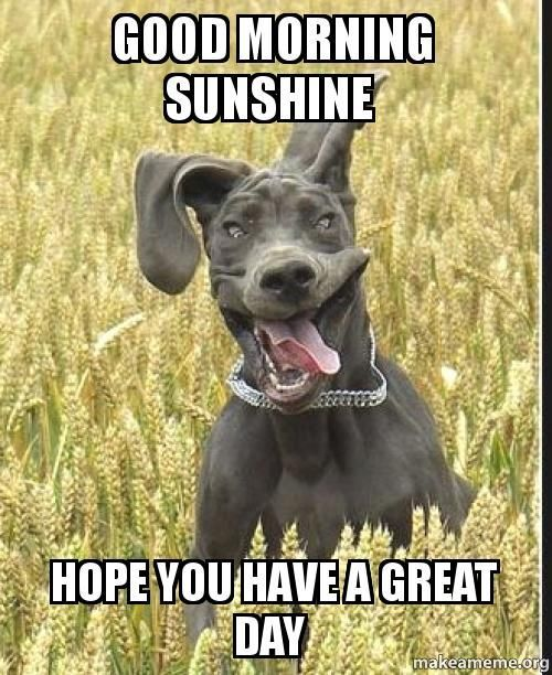 Good Morning Sunshine Hope You Have A Great Day