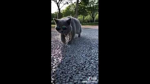 Hot Cat Funny Cat Videos