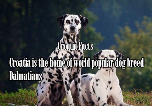 1 Fact – Croatian famous dogs