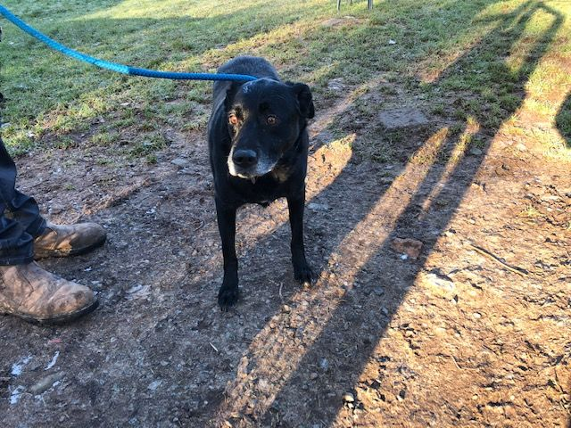 loves pany He would be a wonderful panion Benji enjoys his walks and is good around other dogs He is neutered chipped and vaccinated