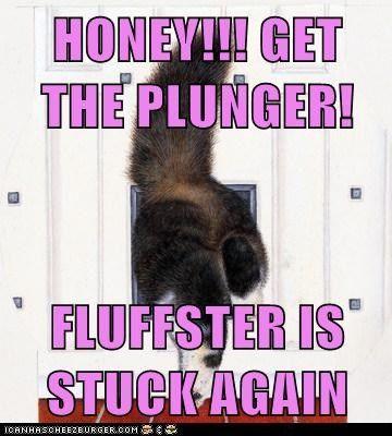 cat butt fat stuck funny