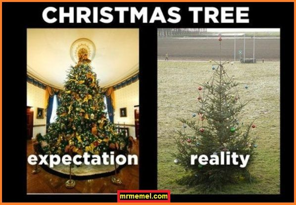 Christmas Tree funny meme about holidays