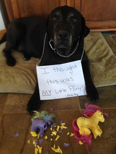 cnkguy4 Tags dogshaming